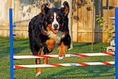DOG 01 IC0005 01
