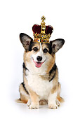 DOG 01 JD0008 01