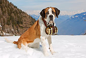 DOG 01 JE0002 01