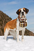 DOG 01 JE0003 01