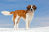 DOG 01 JE0007 01