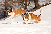 DOG 01 JE0012 01