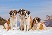 DOG 01 JE0014 01