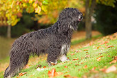 DOG 01 JE0028 01