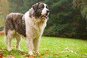 DOG 01 JE0034 01