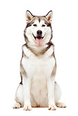 DOG 01 JE0048 01