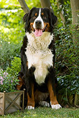 DOG 01 JE0049 01