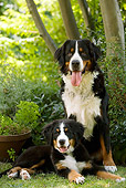 DOG 01 JE0050 01