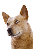 DOG 01 JE0056 01