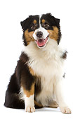 DOG 01 JE0057 01