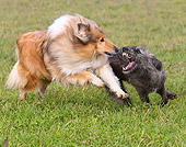 DOG 01 JE0058 01