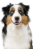 DOG 01 JE0062 01