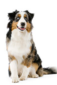 DOG 01 JE0064 01