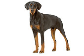 DOG 01 JE0066 01