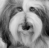 DOG 01 JE0071 01
