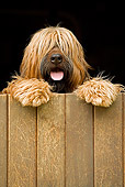DOG 01 JE0073 01