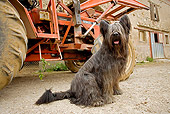 DOG 01 JE0075 01