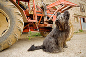 DOG 01 JE0076 01
