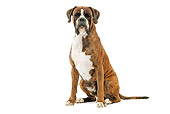 DOG 01 JE0079 01