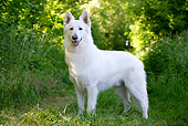 DOG 01 JE0087 01