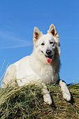 DOG 01 JE0090 01