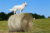DOG 01 JE0091 01