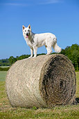 DOG 01 JE0092 01