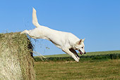 DOG 01 JE0093 01