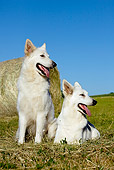 DOG 01 JE0095 01