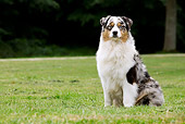DOG 01 JE0097 01