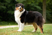 DOG 01 JE0098 01
