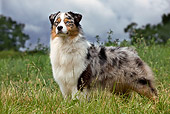 DOG 01 JE0099 01