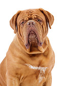 DOG 01 JE0117 01