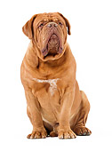 DOG 01 JE0118 01