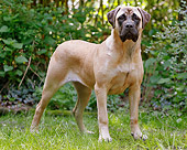 DOG 01 JE0124 01