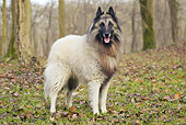 DOG 01 JE0127 01