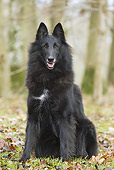 DOG 01 JE0128 01
