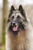 DOG 01 JE0129 01