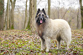 DOG 01 JE0130 01