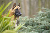 DOG 01 JE0131 01