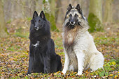 DOG 01 JE0132 01
