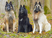 DOG 01 JE0133 01