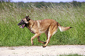 DOG 01 JE0136 01