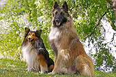 DOG 01 JE0137 01