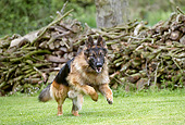 DOG 01 JE0146 01