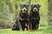 DOG 01 JE0150 01