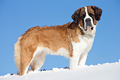 DOG 01 JE0152 01