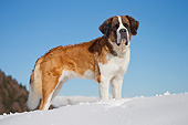 DOG 01 JE0153 01