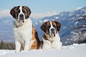 DOG 01 JE0156 01