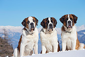 DOG 01 JE0157 01